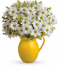 Sunny Pitcher of Daisies